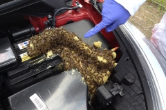 Honeybee Car Rescue 1