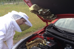 Honeybee Car Rescue 3